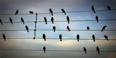 Dream-Like Song Created From Birds Perched On Electric