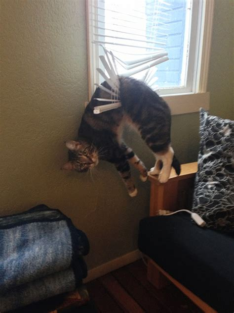 10+ Cats Who Immediately Regretted Their Poor Life Choices