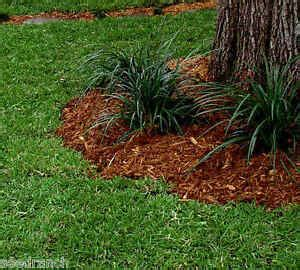 DoubleEagle Centipede Grass Seed - 1/2 Lb