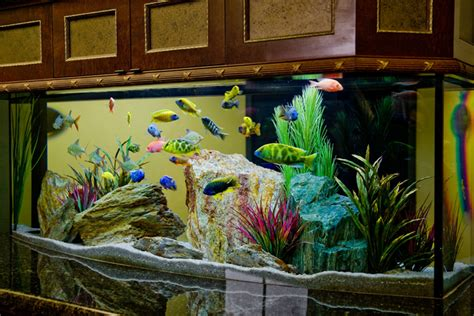 27 Cool Aquariums for Your Home