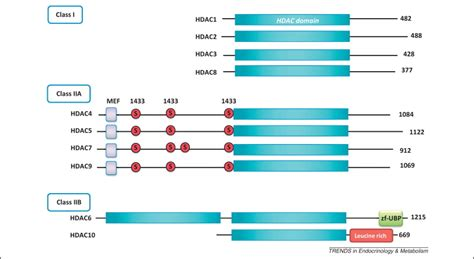 Metabolic reprogramming by class I and II histone
